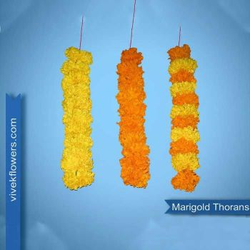 Marigold Strings