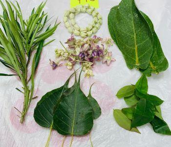 Patri Leaves
