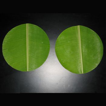 Round Banana Leaf