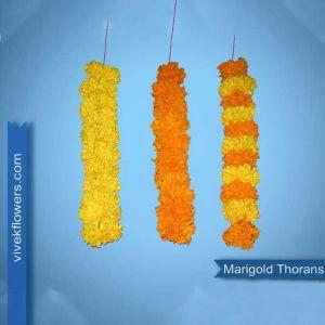 Marigold Strings