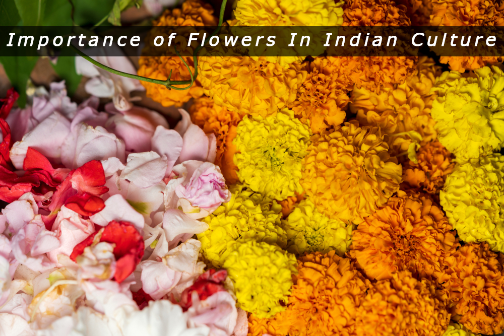 Significance Of Different Flowers In Indian Culture